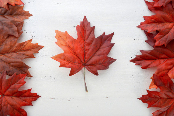 Happy Canada Day red silk leaves in shape of Canadian Flag on white shabby chic wood table.